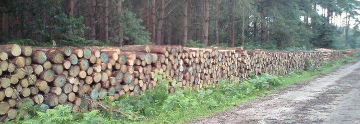 Stacked log pile